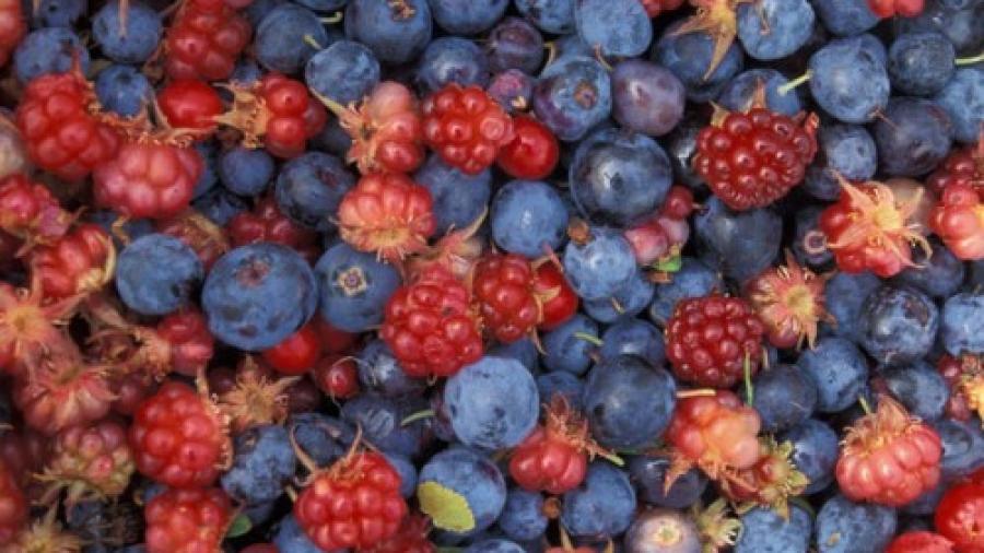 frutti-di-bosco1