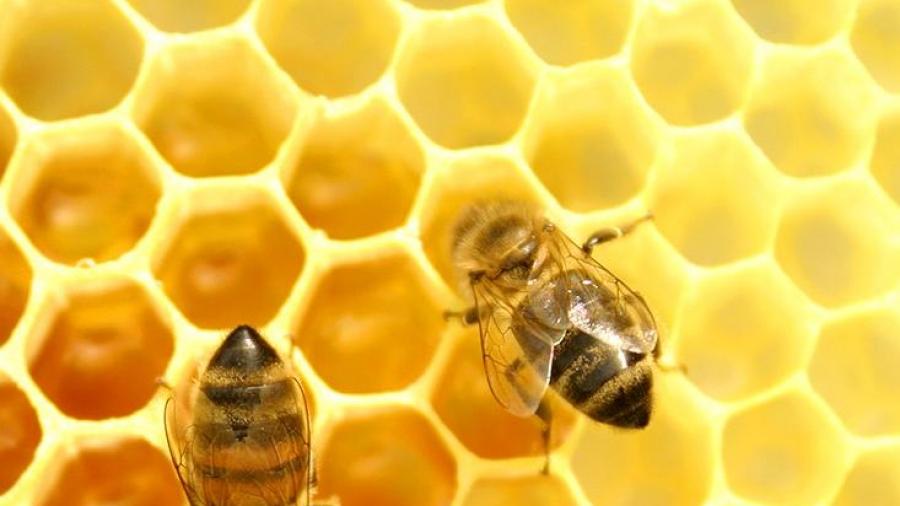 api-e-miele