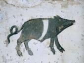 suino-nero-cinghiato-2