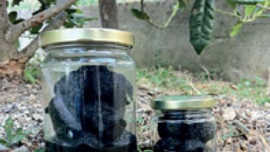 conservazione-tartufi