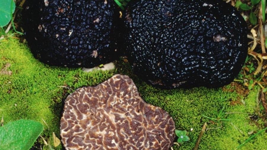 nero-brumale