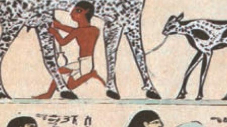 egizi tartufo